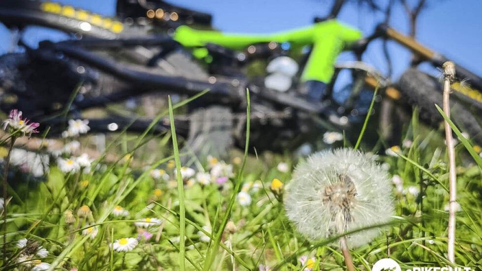 Allergie: ecco come alleviare i sintomi con alimentazione e giuste abitudini